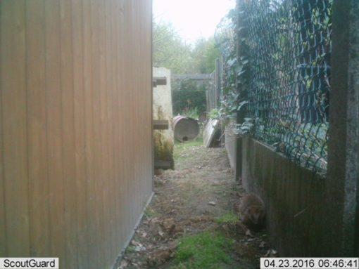 Ook een kleine leukerd die wel welkom is in mijn tuin...