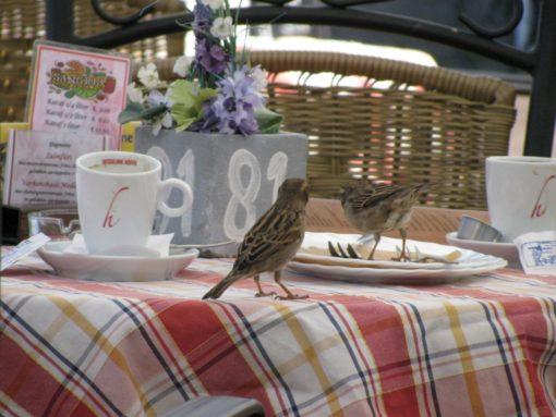Vogeltjes die de laatste restjes komen opeten.