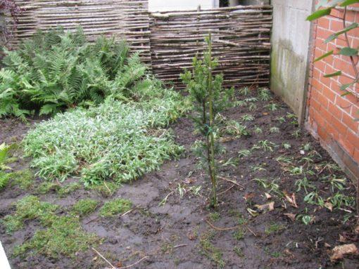 De hoek voor de garage is opgekuist. Stond redelijk want onkruid en mos in. Heb de bodembedekkers wat gestekt en verplant.