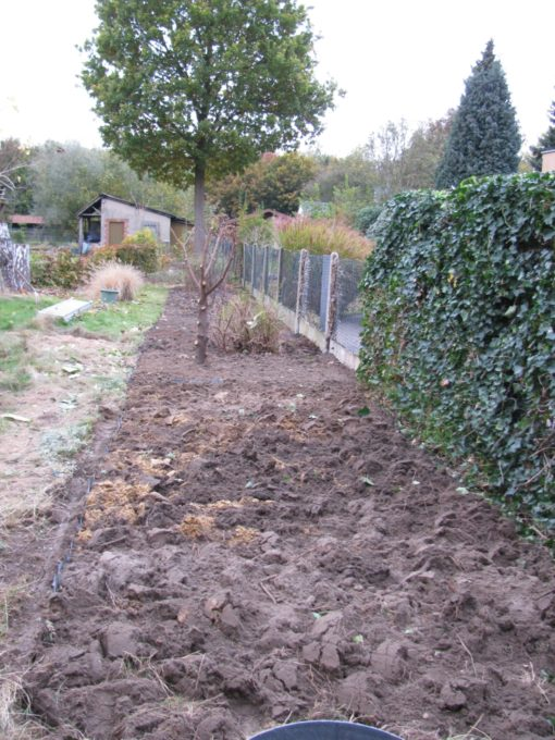Na een paar weekends ben ik erdoor.  Langs de kant van het gazon zit 25 cm EPDM in de grond zodat het gras niet meer in de border groeit.  Waar die geknotte paplaurier staat heb ik ook EPDM in de grond gestoken, daar is een stukje waar de meiklokjes mogen blijven groeien.