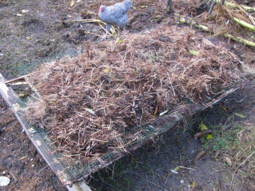 Per meter border heb ik 2 kruiwagens wortels van het meiklokje uitgeraapt.  Hier ligt de helft te drogen zodat ik het kapot krijg.