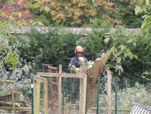 Met dank aan Robin Moens voor de hulp.  Zonder hem zou alle omheining rond de bomen kapot geweest zijn door vallende takken.